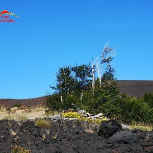 Etna Brandelli e bombe vulcaniche erzione del 2002