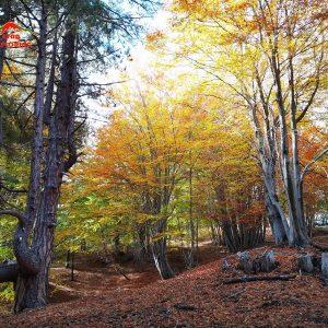Etna Pini secolari nel bosco